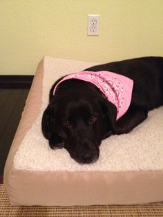 Rita is 4 years old and a real lover. New name - Petunia. Labrador Retriever Rescue, Foster Dog, New Names, 4 Year Olds, Petunias, 4 Years, The Fosters, Adoption, Dogs
