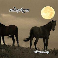 Όμορφες εικόνες για καληνύχτα - eikones top Good Morning Good Night, Horses, Animals, Animales, Animaux, Animal, Animais, Horse