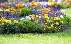 front flower bed landscaping ideas | salvia and small yellow flowers?