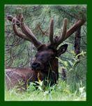 Elk Country  Weedville, PA