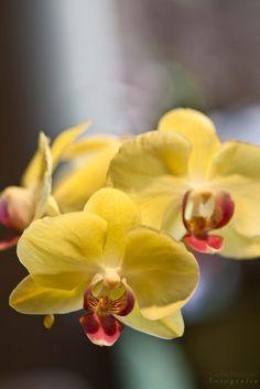 Paisagista ensina como conservar orquídeas por mais tempo