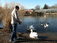Swans & Ducks (and Dave)