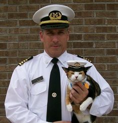 navycat with his person - love the little hat :-)