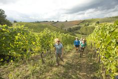Getting up close and personal with Tuscany's famed vineyards on one of our many hikes.