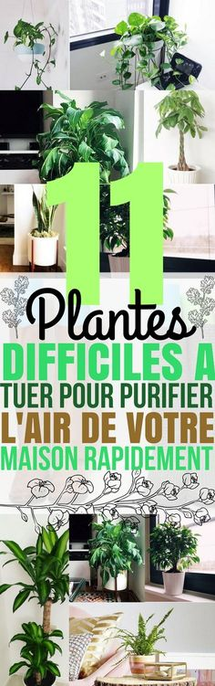 Je m'intéresse de plus en plus aux plantes d'intérieur. Elles ne servent pas seulement à rendre notre intérieur plus joli! L'air...