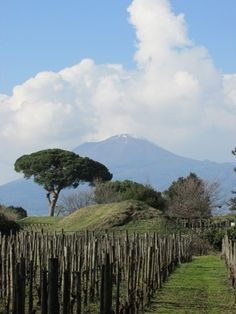 20a51f842233b79bc2ee7700411f2718--pompeii-italy-southern-italy.jpg (480×640)