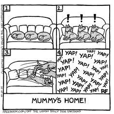 💕 Sunday Funny 😆  #offleash #Comics #Farside #Sundayfunday  #Sundayfunny #merryjaneandthor Animals And Pets, Funny Animals, Cute Animals, Sabrina Carpenter, I Love Dogs, Cute Dogs, The Mummy, Dog Comics, Cartoon Dog
