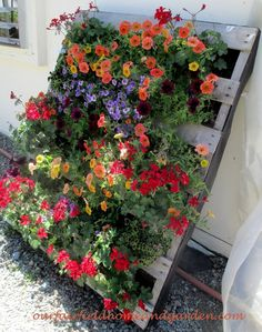 Pretty Pallet Planter filled with Petunias! Container Gardens ~ Our Fairfield Home and Garden                                                                                                                                                                                 Más