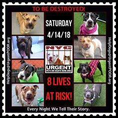 ***8 LIVES TO BE DESTROYED 04/14/18 @ NYC ACC***SO MANY GREAT DOGS ARE BEING KILLED: Puppies, Throw Away Mamas, Good Family Dogs. This is a HIGH KILL care center w/ poor living conditions . View tonight's list here: https://newhope.shelterbuddy.com/Animal/List and https://www.facebook.com/ACC.OfficialAtRiskAnimals/ Dogs