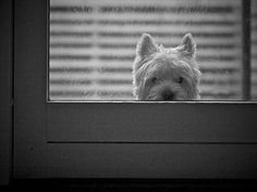 Hey,you are back from shopping and  I see the treats-let me in please!!