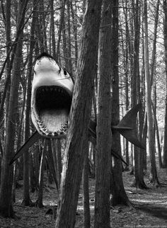 If a shark falls in the forest