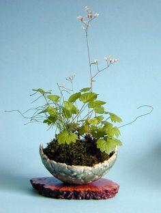 Kusamono gallery | Wendy Heller-Saxifragia Violet and Dwarf Equisetum moss