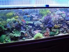 My 560 gallon tank after the move when it had become reestablished