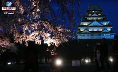 As flores de sakura contracenam com o Castelo de Osaka iluminado, no Jardim Nishinomaru. Saiba mais.