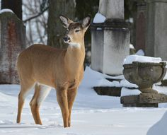 Deer by Judy M Tomlinson Photography via Flickr
