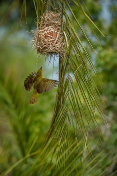 Coming home - Weaver,