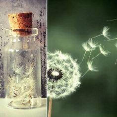 Dandelion, Flowers, Plants, Instagram, Dandelions, Plant, Taraxacum Officinale, Royal Icing Flowers, Flower