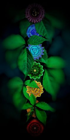 Zen Wallpaper, Wallpaper Nature Flowers, Lord Shiva Hd Wallpaper, Beautiful Flowers Wallpapers, Krishna Wallpaper, Beautiful Nature Wallpaper, Flower Wallpaper, Wallpaper Backgrounds, Chakras