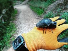 """Cool little #geocache. This type of nano won't """"bug"""" you. (koreographica_geocaching pic) #IBGCp"""