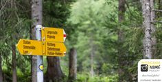 Yellow guidelines - hiking in Switzerland Zermatt, Alpine Flowers, Yellow Sign, Johann Wolfgang Von Goethe, Swiss Alps, Switzerland, Backpacking, Hiking, Instagram