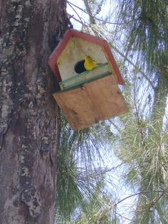 casinha de passarinho no camping
