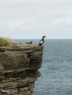 Papa Westray, Orkney Islands