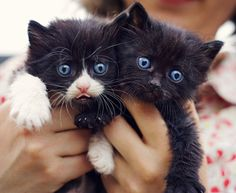 Pink and black little noses :) by Andreea OK on Flickr.