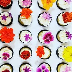Cupcakes: Mini cupcakes with edible blooms. Edible Garden, Mini Cupcakes, Flower Power, Frost, Bloom, Treats, Ethnic Recipes, Floral, Cute