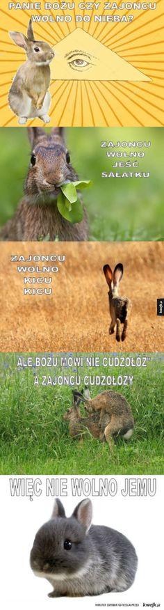 Panie Bożu, czy wolno im do nieba? Funny Mems, Man Humor, Reaction Pictures, Fun Facts, Haha, Cursed Images, Animals, Life, Fotografia