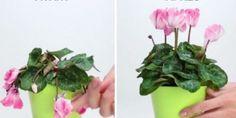 L'astuce pour sauver une plante en mauvais état