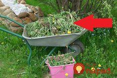 Burina je problémom snáď každej jednej záhrady. Ak s ňou nebojujeme, dokáže spoľahlivo zničiť našu úrodu aj okrasné rastliny. Najčastejšie s ňou bojujeme umelými prostriedkami z obchodu, alebo jednoducho tak, že burinu zo zeme pracne