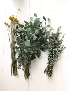 Billy balls and eucalyptus for a tall bouquet. Dried Eucalyptus, Eucalyptus Bouquet, Eucalyptus Wedding, How To Wrap Flowers, Diy Flowers, Wedding Flowers, Billy Balls, Dried Flower Arrangements, Baby Shower Flowers