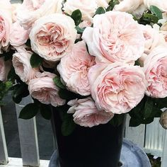 full blooms