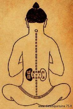 Les reins selon la médecine traditionnelle chinoise.
