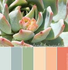 a succulent-inspired color palette // From the minty green and icy blue hues to the yellows, peaches, and pinks, this robust little plant makes for a perfect palette of soft summer colors. succulents again Colour Pallette, Color Palate, Colour Schemes, Color Combos, Summer Colour Palette, Ocean Color Palette, Green Palette, Pantone, Cores Rgb
