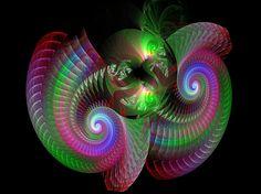 Shells Digital Art by Diana Coatu