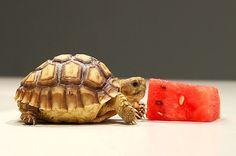 Tortoise Logo Ideas