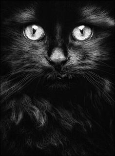 """previous pinner said: """"Black cat. I am promoting pure black cats. I want to try to change peoples mind that these cats are not evil. I do not mind some black and white cats and even tigers, but more pure black cats. Pretty Cats, Beautiful Cats, Animals Beautiful, Cute Animals, Pretty Kitty, Beautiful Soul, Wild Animals, Cute Black Cats, White Cats"""