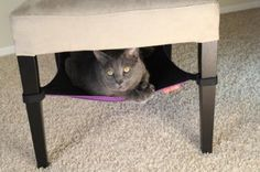 Cat Crib- Purple: Pet Supplies