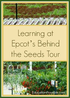 Learning at Epcot's Behind the Seeds Tour @EducationPossible
