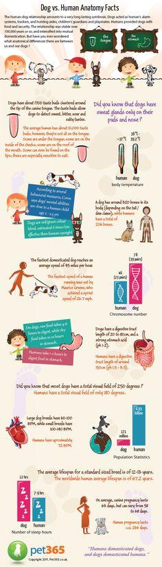 Dog vs. Human AnatomyInfographic