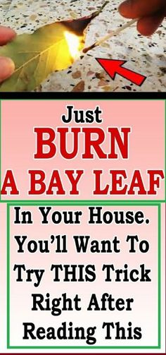 4064bd4f21e0 7 Things That Happen if You Burn a Bay Leaf – Something Logical