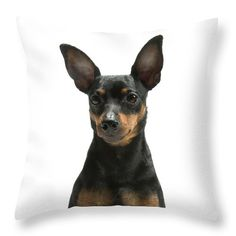 Minpin Throw Pillow for Sale by Gunnar Orn Arnason Throw Pillows, Feeling Pictures, Jobs For Women, Terrier Dog Breeds, Very Beautiful Woman, Enjoying The Sun, Doberman Pinscher, Pillow Sale