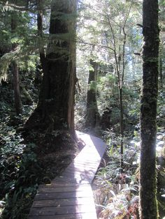 Boardwalk to Tofino Hot Springs, Vancouver Island