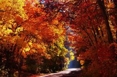 Love the colors of fall