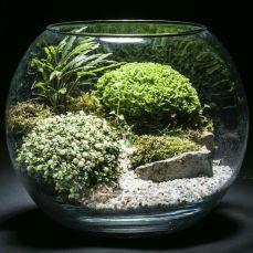 Awesome Bonsai Terrarium On The Jars 26