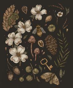 Art And Illustration, Images Murales, Illustration Botanique, New Moon Rituals, Walking In Nature, Pics Art, Botanical Prints, Light In The Dark, Art Inspo