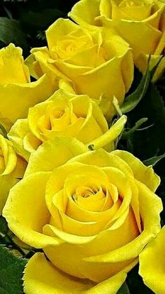 Yellow Roses!