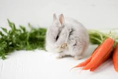 Image result for bunny photoshoot