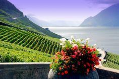 Corniche Lavaux Vineyards in Montreux, Switzerland (by Anu & Anant) Lake Geneva Switzerland, Switzerland Trip, Beautiful World, Beautiful Places, Amazing Places, Travel Around The World, Around The Worlds, World Heritage Sites, Great Photos